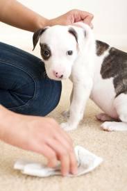 toilet-training-puppy