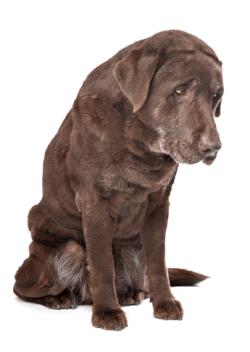 Can You Give a Dog Aspirin