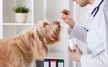 Vet Giving Dog an Aspirin