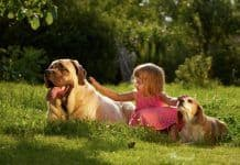 Young girl sitting with St Bernard and Beagle