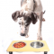 Can Elevated Dog Bowls Benefit Your Furry Friend