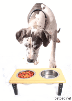 Benefit of Elevated Dog Bowls