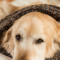 Choosing The Best Orthopedic Dog Bed For Your Arthritic Dog