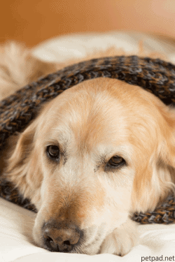 Heated Bed For Dogs With Arthritis