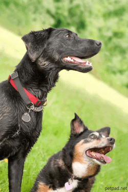 Glucosamine, Chondroitin and MSM for Dogs