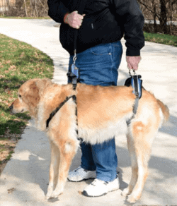 man using best dog lift harness