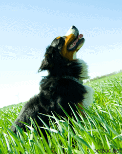 Natural Anti Inflammatories for Dogs