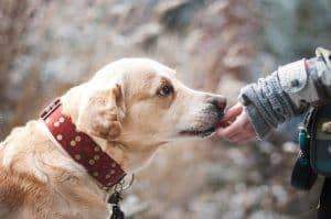 Benefits of Glucosamine, Chondroitin and MSM for Dogs & The Best Supplement Options