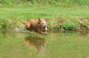 How to Choose The Best Fish Oil For Dogs With Joint Problems