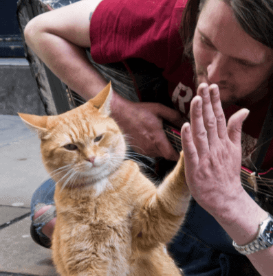 Bob_from_A_Street_Cat_Named_Bob