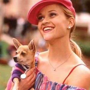 Bruiser from Legally Blonde