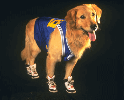 "Buddy the dog from the movie ""Air Bud"""