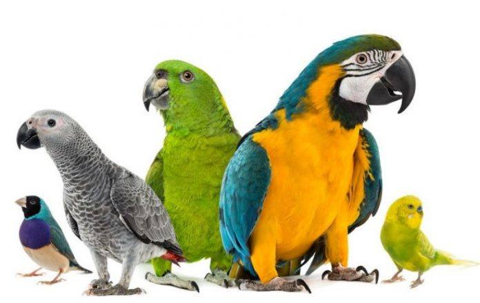 Different Breeds of Parrots
