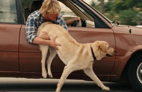 Marley from Marley and Me