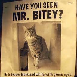 Mr. Bitey