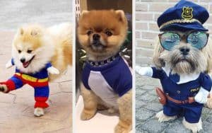 The Dog Clothes Debate: Awkward or Awesome?