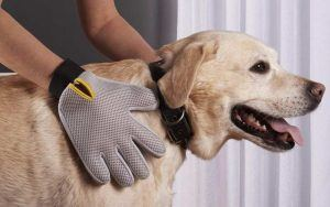 Best Grooming Glove for Dogs Reviews