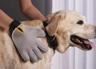 Best dog grooming gloves
