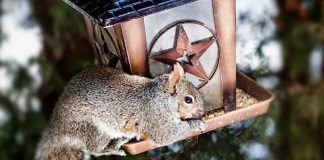 Squirrel proof bird feeder reviews