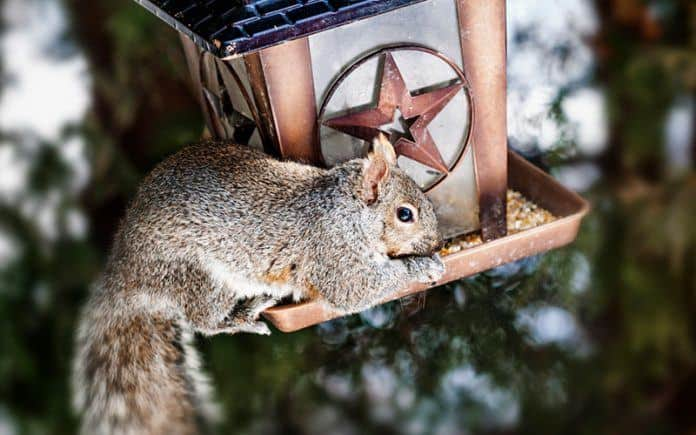 Squirrel proof bird feeder reviews