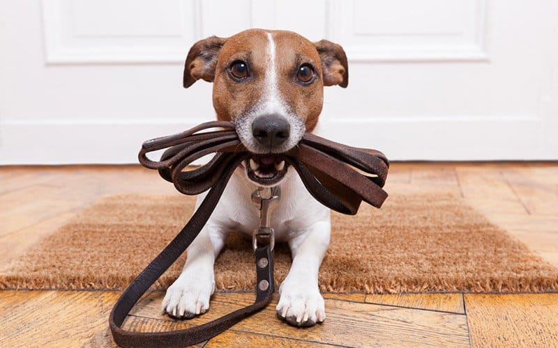 Are you ready for a dog walk?