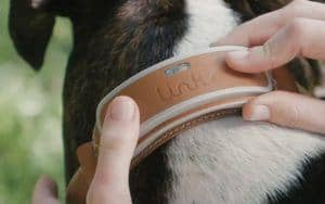 Link AKC Reviews & Comparison To Whistle 3 & Tractive Smart Dog Collars