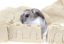 Hamster Inside a Sand Bath Castle