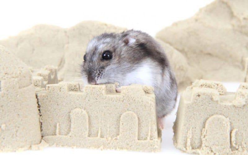 Hamster Inside a Sand Bath Castle