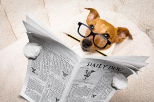 Dog Intelligence Ranking: Our List Of The Smartest Dogs In The World
