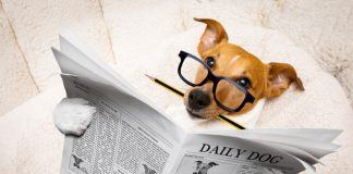 Intelligent Dog Reading The Newspaper