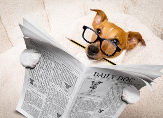 Intelligent Dog Reading The Newspaper