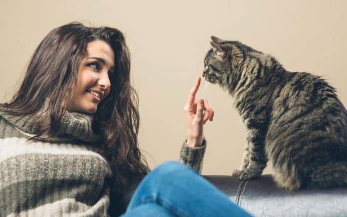 best brushes for long haired cats