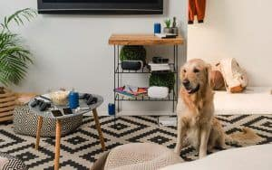 The Best Dog Training Pads To Keep Pee Off Your Floors