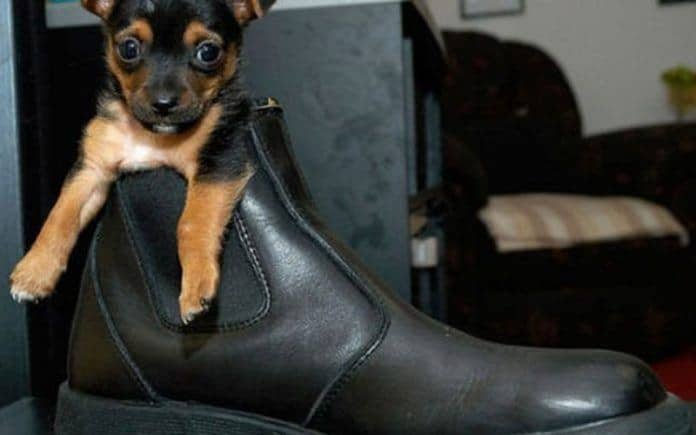 Best dog shoes