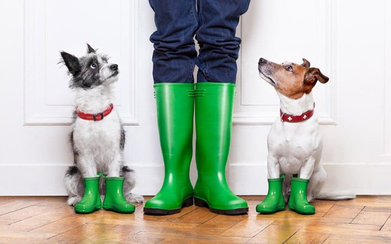 Rain boots for dogs