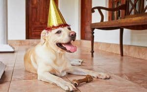 10 Dog Gift Ideas For Your Favorite Pup's Birthday