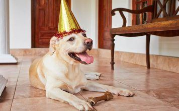10 great gift ideas for dogs