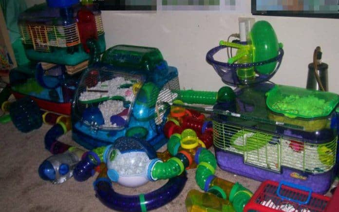 Hamster tubes, tunnels, and cages... oh my!