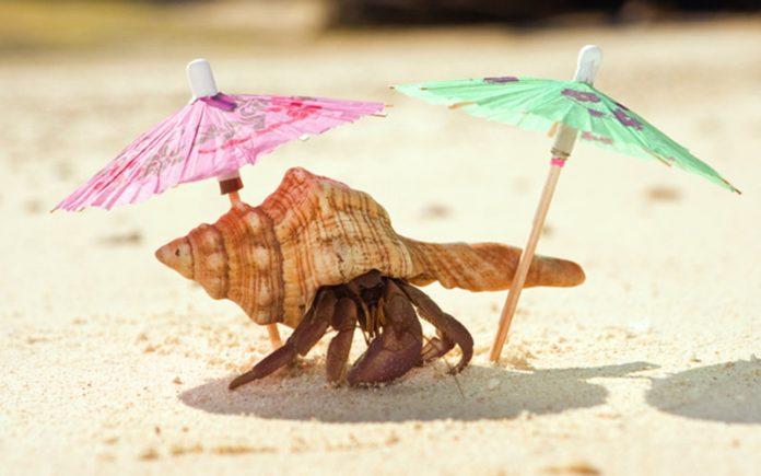 ideal Hermit crab habitat