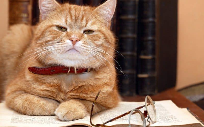 longest living cat breed