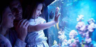 Space fish tank