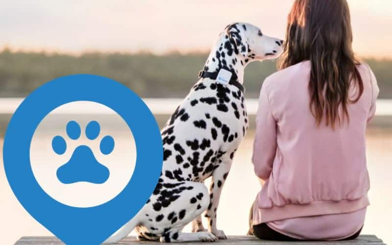 dog wearing tractive gps pet tracker