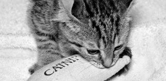 Best catnip toys