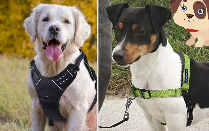 What's the best easy walk no pull dog harness?