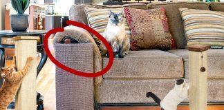 best cat scratchers