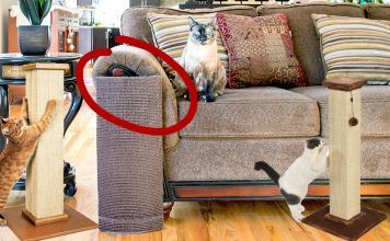 best cat scratchers