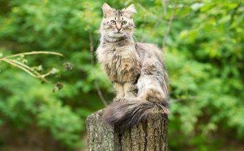 cat sitting on a tree
