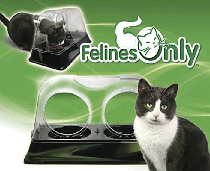 Felines Only Purrrfect Cat Feeding Bowl