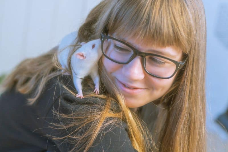 Do Rats Love You - Are Pet Rats Affectionate